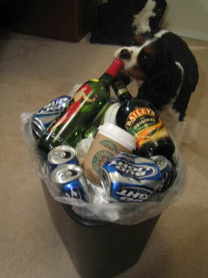 Lack of sleep + alcohol + curious dog = ?